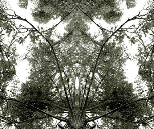 New_z_życia_drzew_1