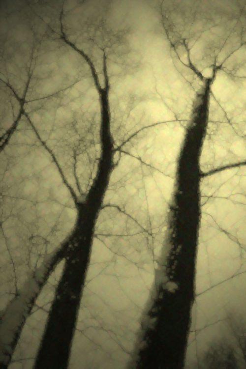 New_z_życia_drzew_2