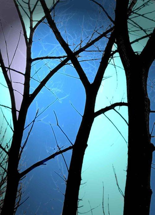 New_z_życia_drzew_3