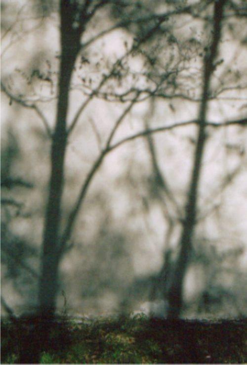 New_z_życia_drzew_4