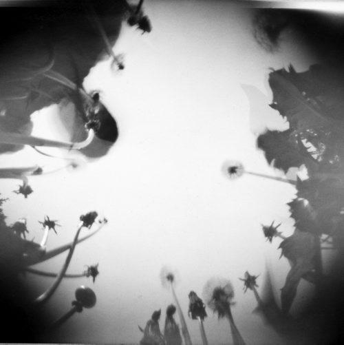 New_Kamil Myszkowski ''Fotosynteza'' 1