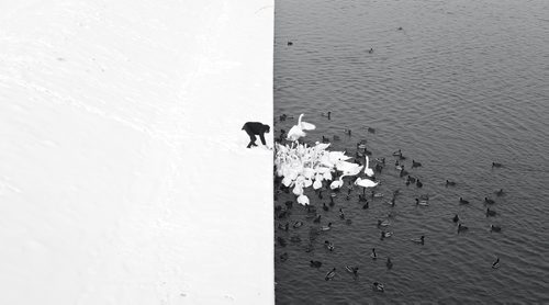 New_Marcin Ryczek_A man feeding swans in the snow