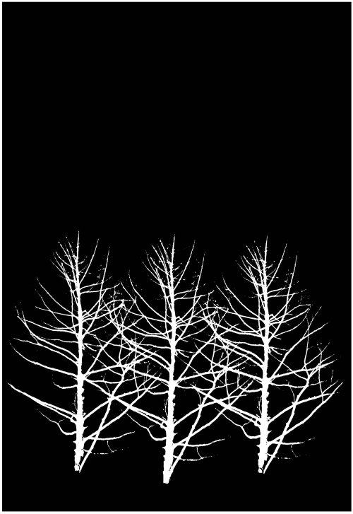 New_425 jesień drzewa 1982-NC