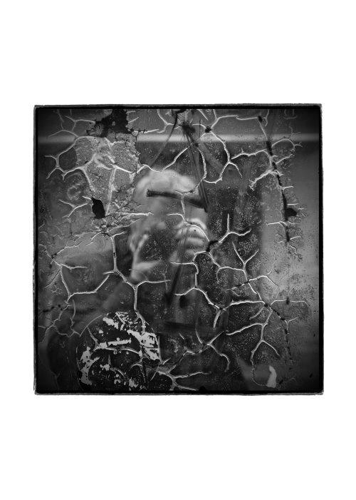 new_jozef-wolny-dab-wystawa-23